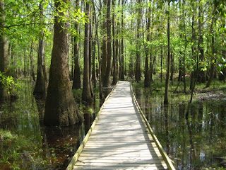 Image result for Stony swamp