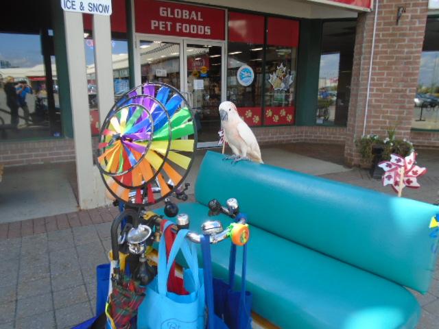 parrotglobal